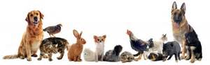 Small Animals Free To Home Compr 201 Hension Orale Les Animaux Du Zoo Fran 231 Ais Pour