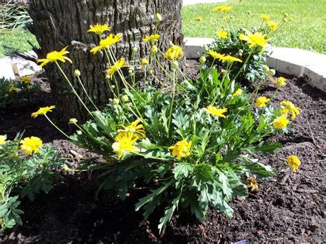 heat tolerant plants heat resistant plants images