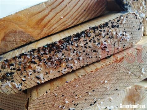 Bed Bug Eggs On Mattress by 0558018467