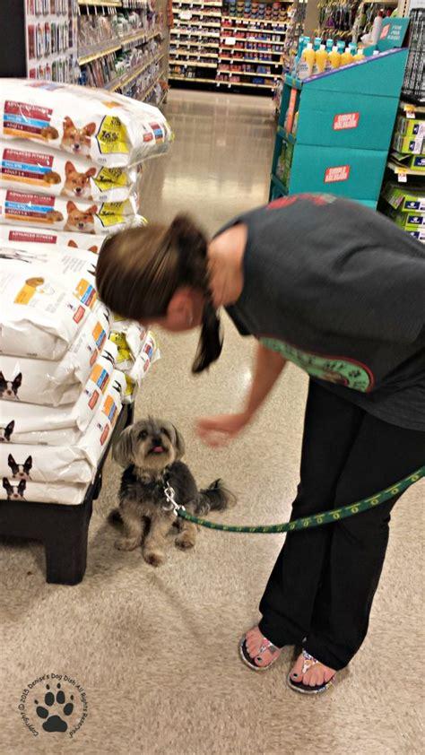 free puppy classes at petsmart rescue journal petsmart dishdog dish