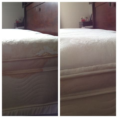 sofa cleaning miami upholstery cleaning miami free stain removal 786 942