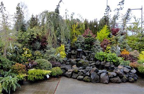 danger garden colorful conifers at portland nursery
