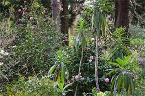 que planter sous les pins