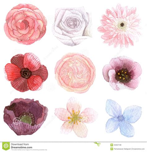 Chrysanthemum by Set Of Many Flowers Stock Illustration Image 49407138