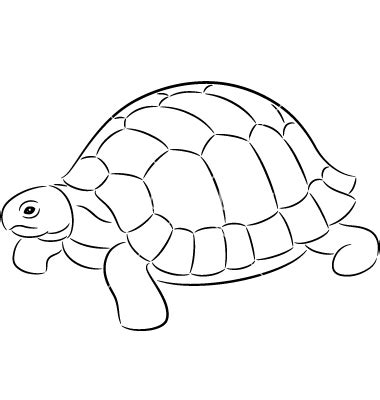 Turtle Outline Vector by Tortoise Clipart Outline Pencil And In Color Tortoise Clipart Outline