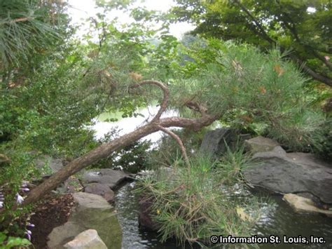 Japanese Festival Missouri Botanical Garden Japanese Festival Missouri Botanical Garden