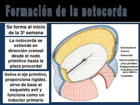 hasta cuando se pagan las placas en cd juarez sin recargos clase de gastrulacion notocorda y neurulacion 2012