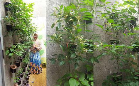 membuat kebun hidroponik sederhana 34 ide kreatif berkebun vertikal sederhana dan murah di