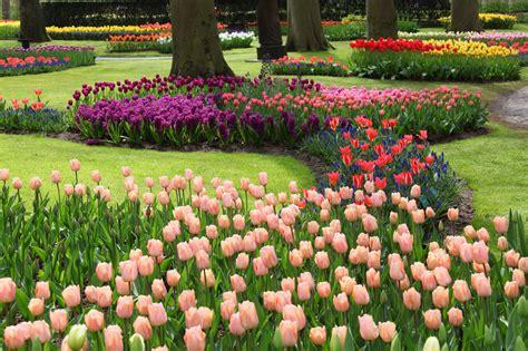 Natur By Lapai colorful flowers in keukenhof free stock photo