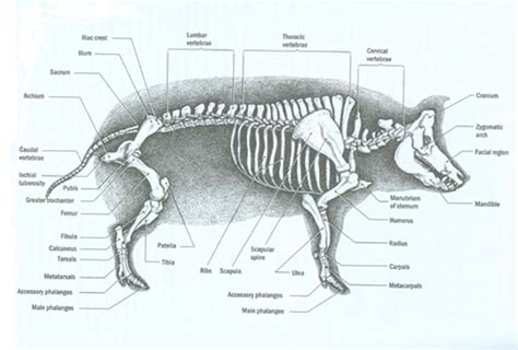 pig diagram pig pre lab lab mr t science