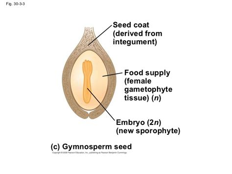 design experiment to demonstrate hydrotropism diagram of seeds drawing of seed elsavadorla