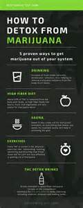 how to detox from at home infographic 5 ways to detox from marijuana best 4 test