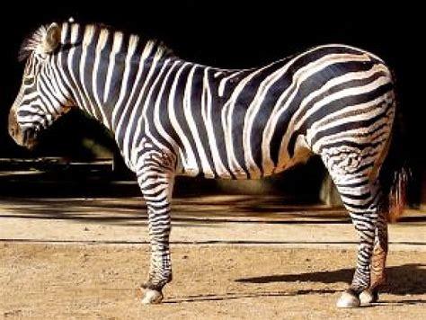 fotos animales zoo imagenes de animales del zoo imagui