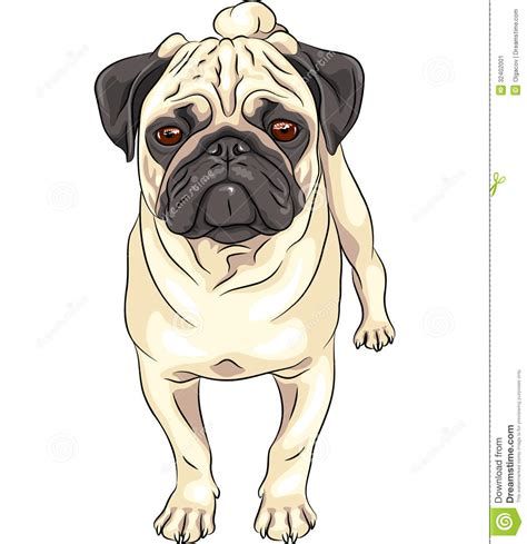 pug illustration pug clipart