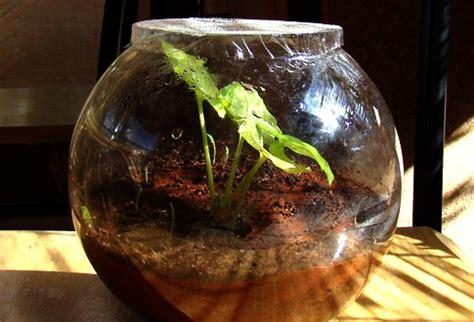 terrarium the magical miniature earth