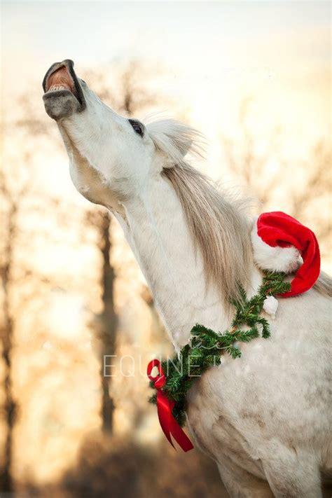 christmas horse   nose turned     singing  christmas carol white horse