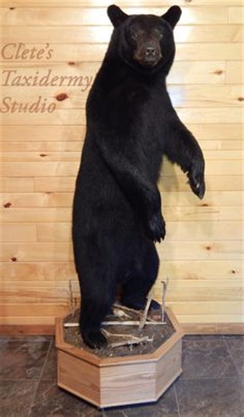 full body bear mount ideas black bear full body mount