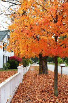 1000 images about autumn fall decorating ideas on 1000 images about fall decorating ideas on