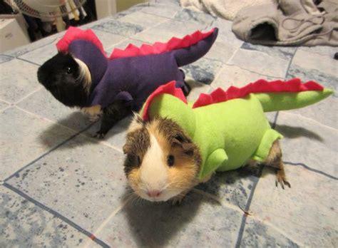 fotos de mascotas  animales disfrazados por sus duenos