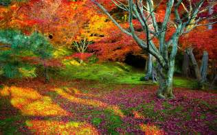 Nature landscape tree trees leaves autumn leaf fall beauty bright