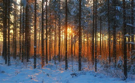 imagenes de bosques otoñales fondos de pantalla bosques amaneceres y atardeceres