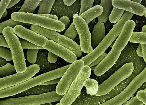 disbiosi intestinale test test disbiosi intestinale dott ssa troiani