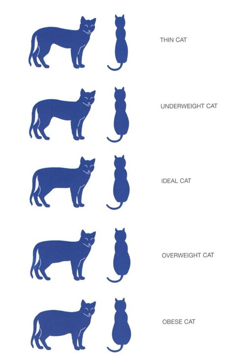 weight management guidelines for dogs and cats image gallery normal cat weight chart