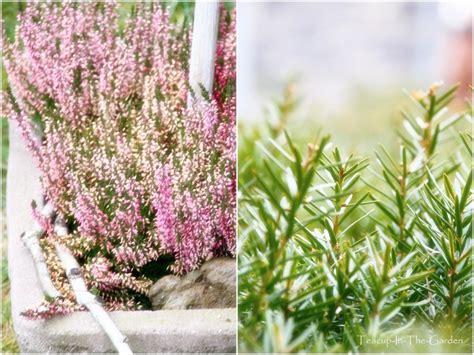 Garten Pflanzen Januar by Teacup In The Garden Der Garten Im Januar
