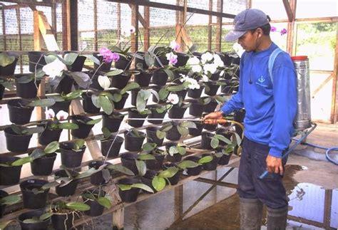 Pot Tanaman Anggrek cara merawat tanaman anggrek dalam pot ragam tanaman