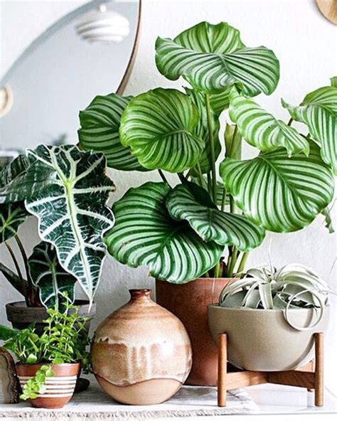 house plant ideas best 25 tropical house plants ideas on