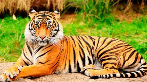 imagenes de animales lindos fondos de animales hd fondos de pantalla y mucho m 225 s