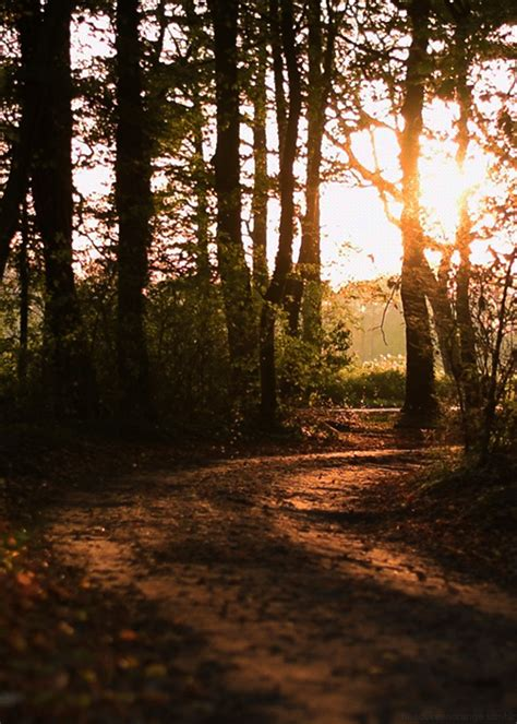 beautiful trees animated gif images  animations