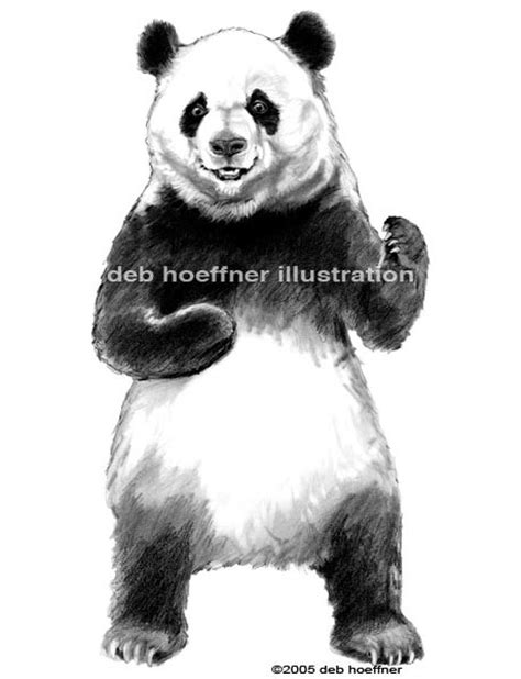 Realistic Panda drawing illustration for product label and