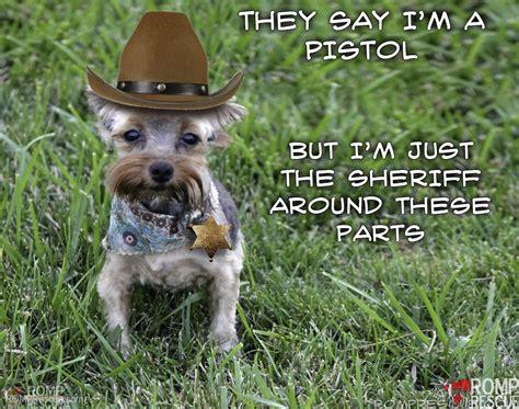 yorkie puppies for adoption in chicago chicago terrier adoption romp italian greyhound rescueromp italian