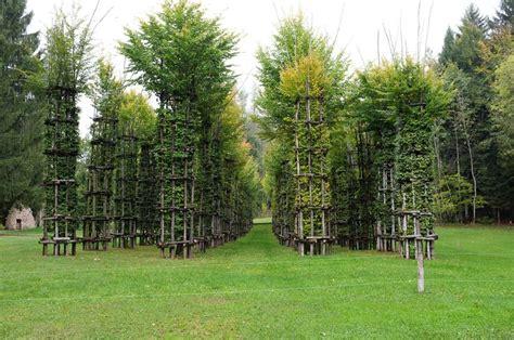 sella accedi oltre 25 fantastiche idee su alberi secolari su