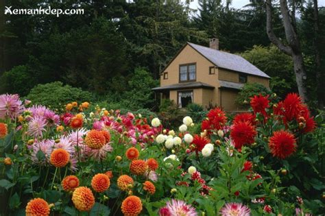 Pretty Flower Gardens Pictures Beautiful Flower Gardens Photos Garden Picturess Xemanhdep Photos Awesome Pictures Gallery