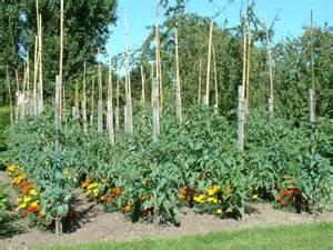 l autre potager de tomodori le suivi de vos semis 2007