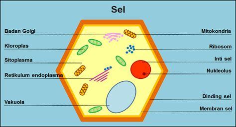 Biologi Sel Edisi 7 microscopy pictures sel biologi