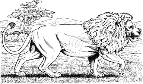coloring pages lions tigers coloring pages lions tigers coloring page kids