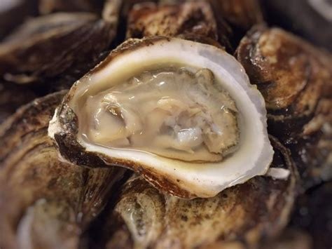 17 best images about oysters 17 best images about hu 238 tres oysters on canada