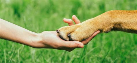 how to cope with losing a how to cope with the loss of a pet