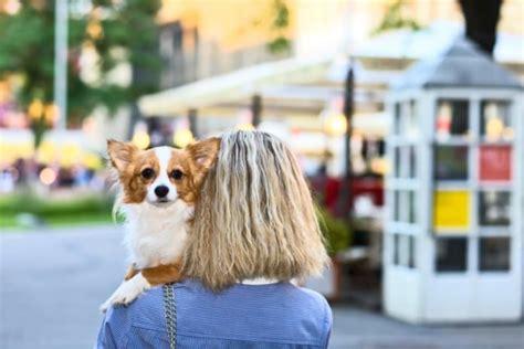 wie kann ich wohnung mieten wohnungssuche mit hund