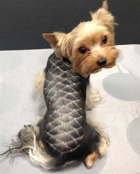haircuts for yorkies 17 best ideas about yorkie hairstyles on pinterest