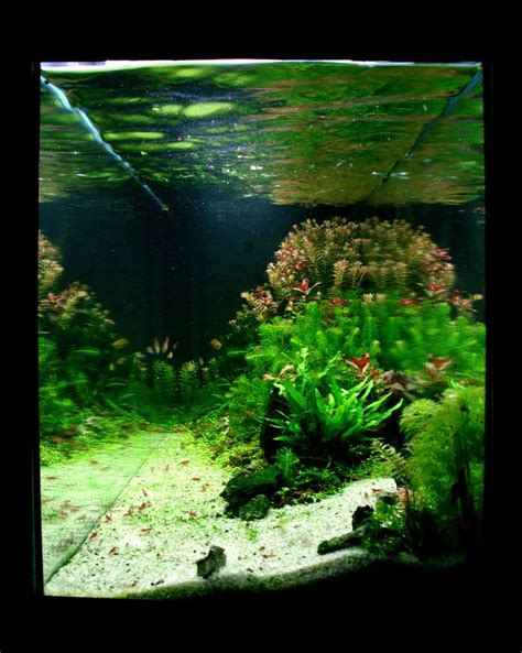 aquarium design usa 410 best nano aquascaping with freshwater snails images on