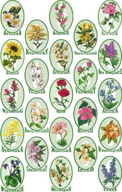 state flowers list advanced embroidery designs complete state flowers set