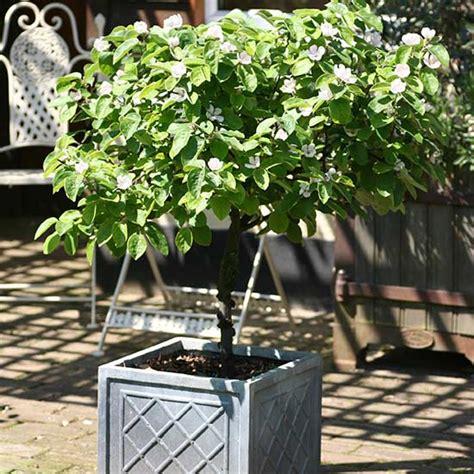 pomona fruits buy fruit trees soft fruit bushes