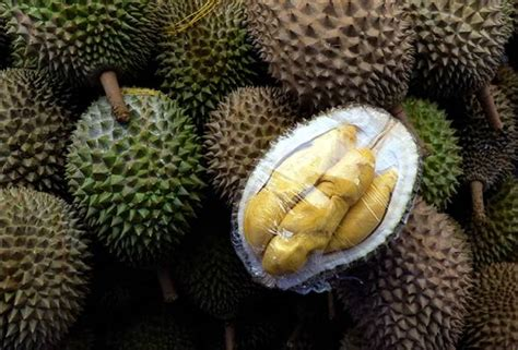 kenali musang king elak ditipu peniaga durian astro awani