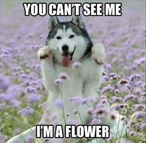 Funny Cute Animal Memes - 30 funny animal captions part 8 30 pics amazing