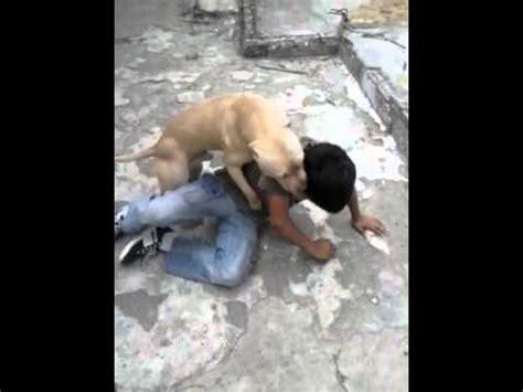 imagenes impresionantes de ataques de animales terrible ataque de un pitbull a inocente ni 209 o youtube