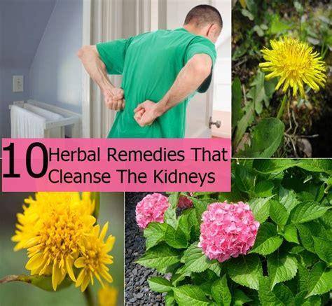 Ayurvedic Cure Detox by Top 10 Herbal Remedies That Cleanse The Kidneys Diy Home
